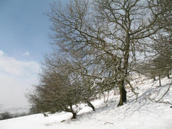 snow 1 mar 06 017